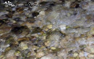 torrente che scorre