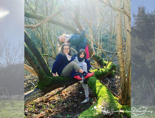 Un'avventura nel nostro bosco